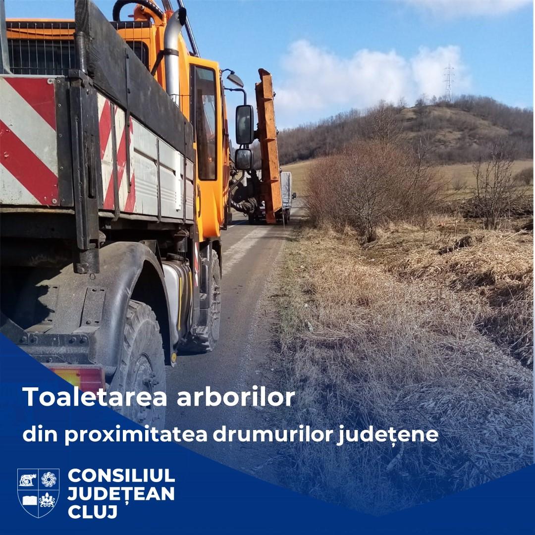 Consiliul Județean Cluj a demarat lucrările de toaletare a arborilor din vecinătatea drumurilor județene