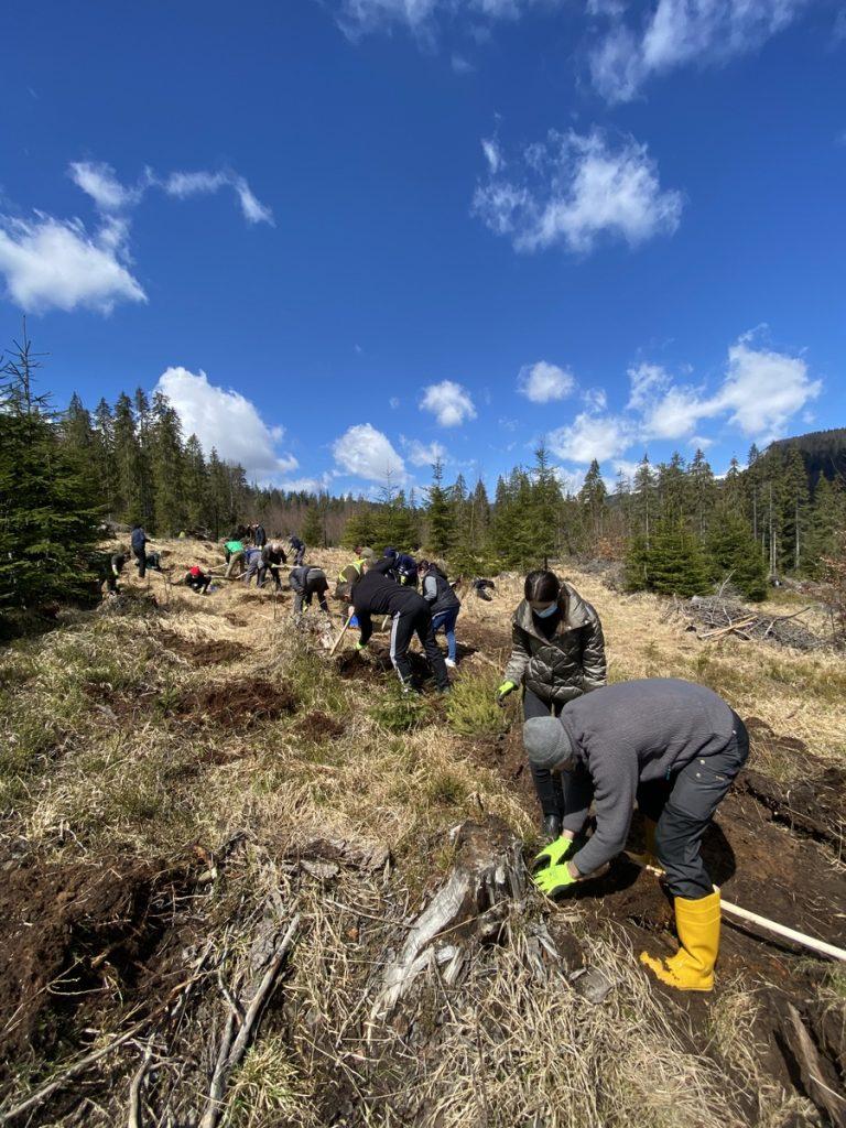 Angajații IULIUS au plantat 4.500 de copaci pentru un viitor cu aer mai curat în județele Cluj, Iași și Suceava